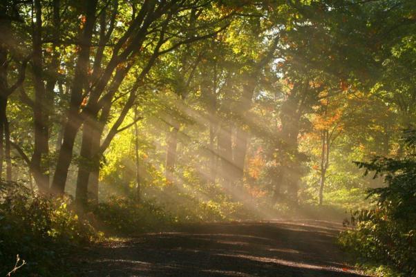 sunny-path