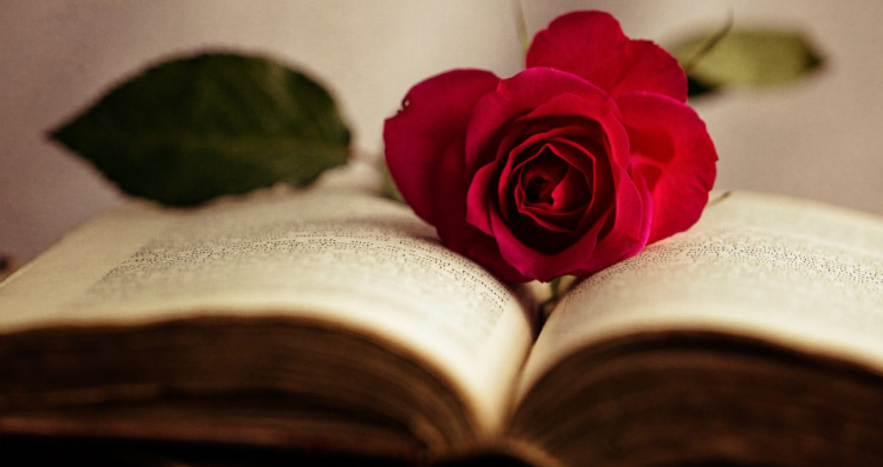 cropped-rose-and-book.jpg