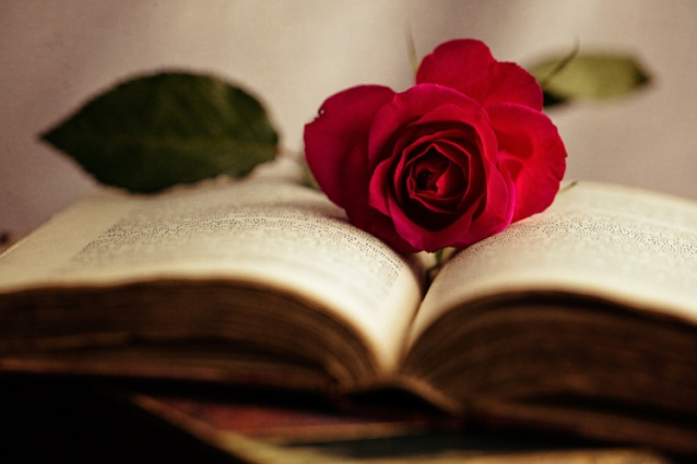 rose and book