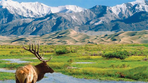 Colorado Rockies and elk