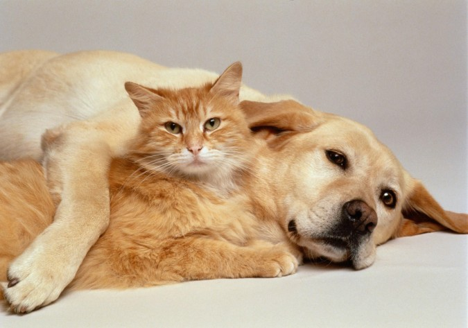 Wallpaper Of Cute Cats And Dogs Cat And Dog Wallpapers - Wallpaper Cave