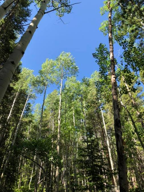 canopy of trees day 2 hiking RMNP July 2019