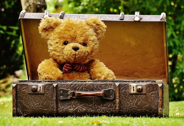 teddy bear in suitcase